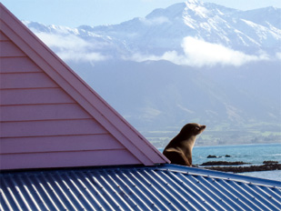 Seal on the roof of Fyffe House